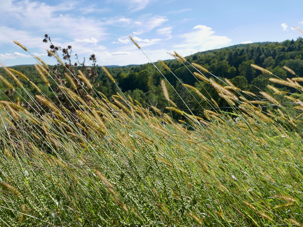 Cara Sharratt Travel - Sugarbush Farms - Woodstock, Vermont