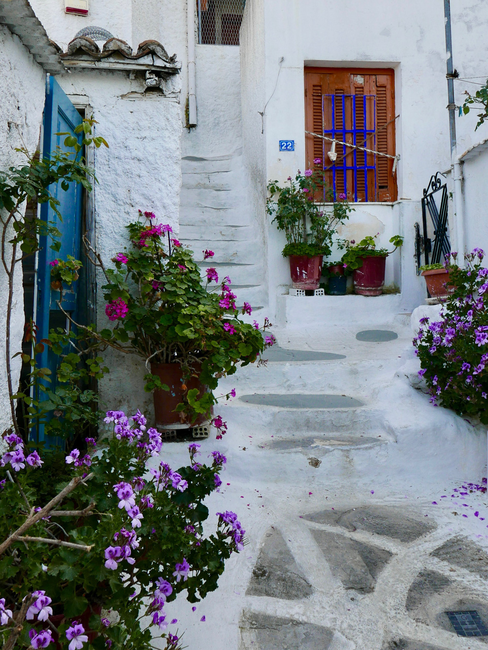 Cara Sharratt Travel - Athens, Greece - Flowers